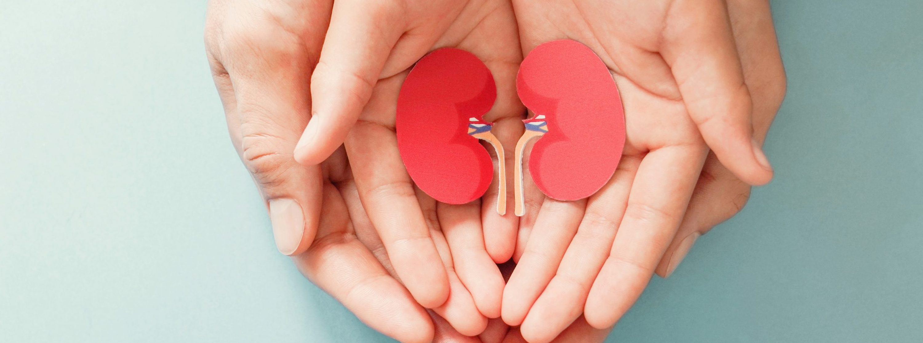 Adult and child holding kidney shaped paper, world kidney day, National Organ Donor Day, charity donation concept